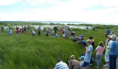 Spiselige planter ved kysten – for alle aldre