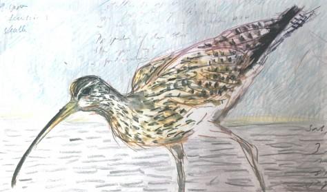 Odsherreds Vadehav - fuglenes paradis