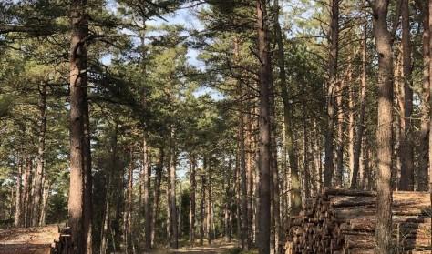 Skovtur i Tisvilde Hegn