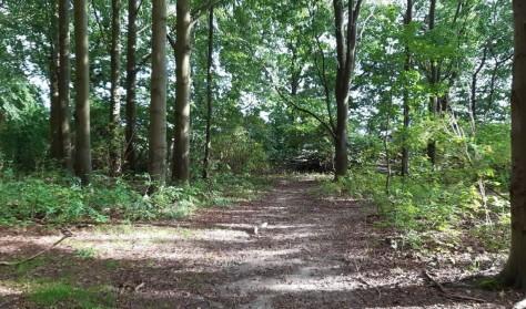 Skovtur ved Humlebæk