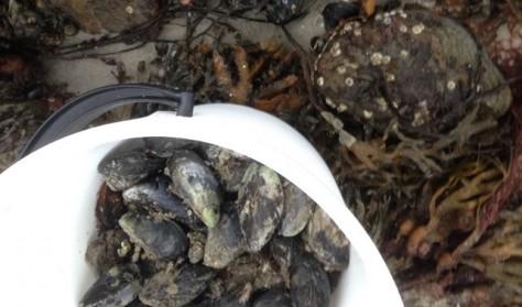 Naturgastronomi - Hvidvinsdampede muslinger over bål
