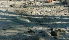 Naturgastronomi - Polynesisk jordovn m. gris