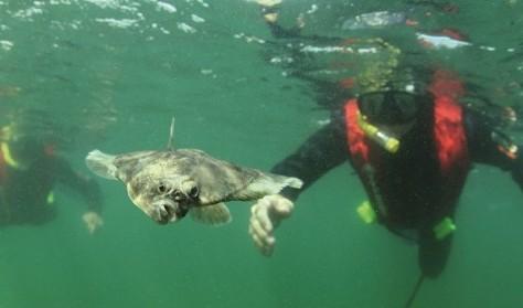 Snorkelture i Øresund