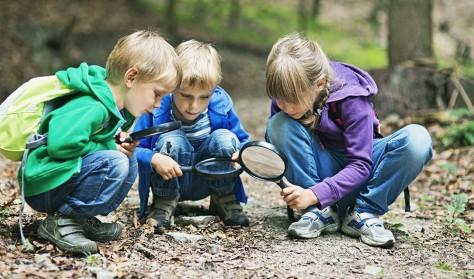 Tag med på insektjagt i Kærehaveskoven