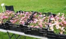 Plantesalg og Plantebytte